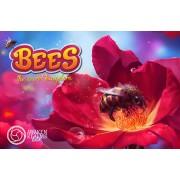 Boite de Bees: The Secret Kingdom